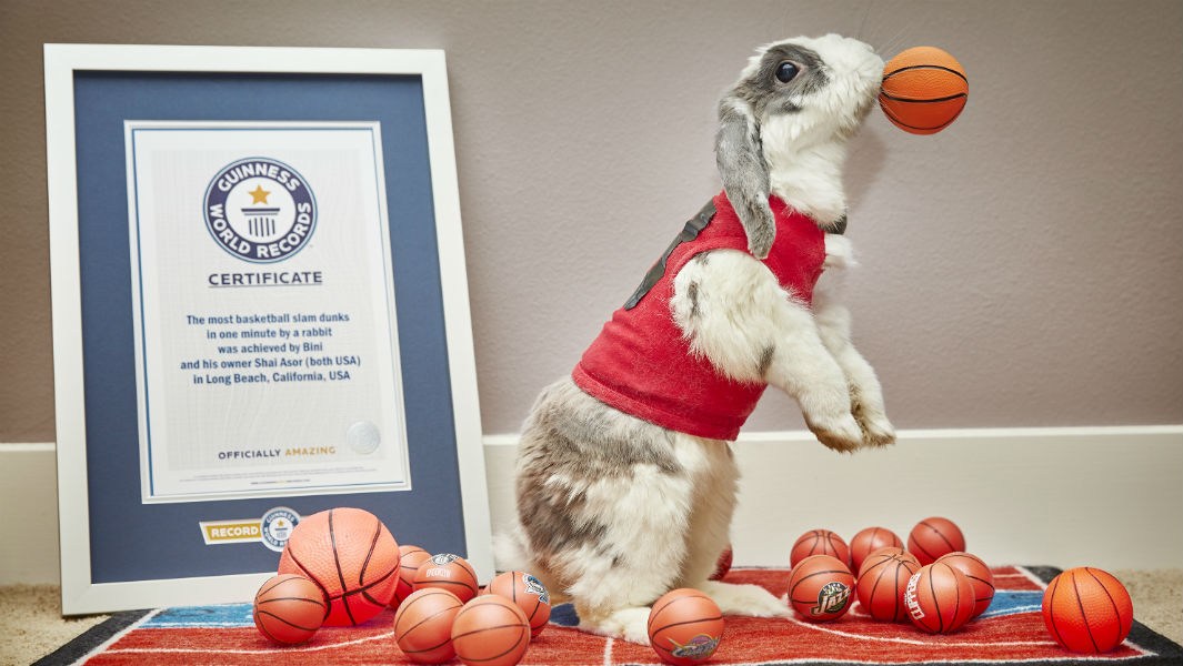Vídeo: Bini o coelho que pulou para dentro do livro Guinness World Records Amazing Animals