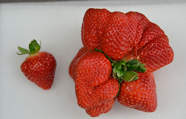 Heaviest strawberry